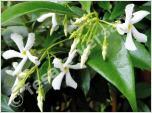 Kletterpflanzen bei fesaja® kaufen.