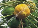 Nutzpflanzen (Samen)