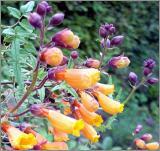 Exotische Pflanzen aus aller Welt