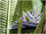 Pflanzen aus Afrika