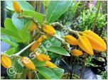 Pflanzen aus Südamerika